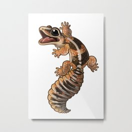 African Fat-Tail Gecko Metal Print