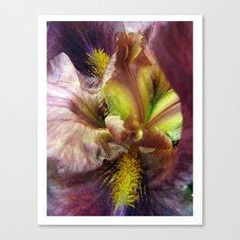 Iris Abstraction #100 Canvas Print