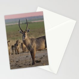 The Waterbuck and his Ladies Stationery Cards
