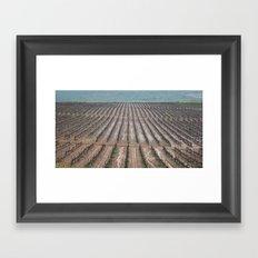 Rainy Wineyards Framed Art Print