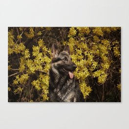 Shepherds love the spring Canvas Print