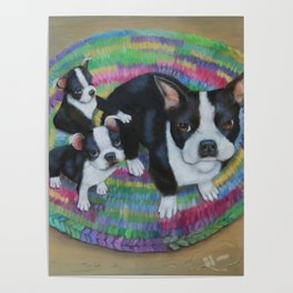 Boston Terrier and Puppies Poster