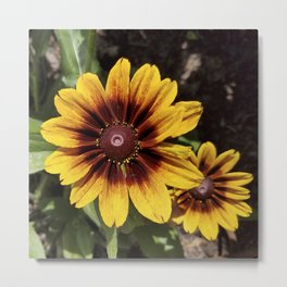 Really Radiant Rudbeckia Metal Print