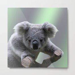 Koala Bear Metal Print