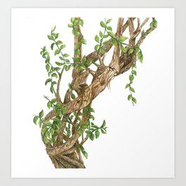 Twisting woods Art Print