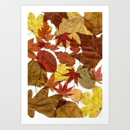 Autumn / Fall copper & gold leaves in English park - Oak, Beech Art Print