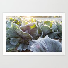 Cabbage Patch Art Print