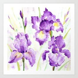 Watercolor Blue Iris Flowers Art Print