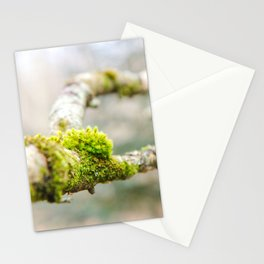 Branch in the Fall Stationery Cards
