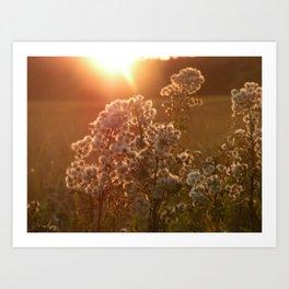 flowers at sunset Art Print