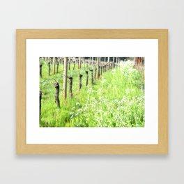 SPRING VINEYARDS Framed Art Print