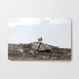 Colorado Mountain Goat 2 Metal Print