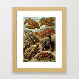 Sea Turtle Collage-Ernst Haeckel Framed Art Print