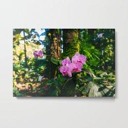 Pink Moth Orchids 2 Metal Print