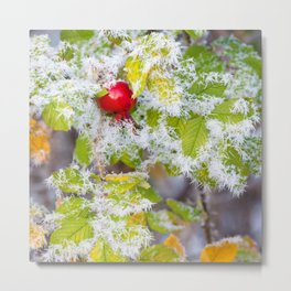 Rose hip and frozen leaves Metal Print