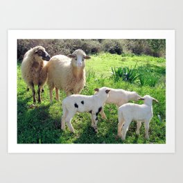 Two Ewes and Three Lambs Grazing Art Print
