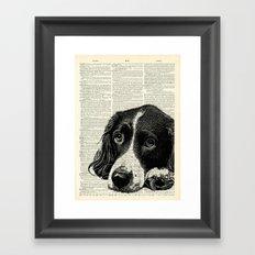 Vintage Springer Spaniel Framed Art Print