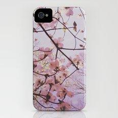 Dogwood 1 iPhone (4, 4s) Slim Case
