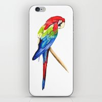 parrot iPhone & iPod Skins featuring Parrot by Bridget Davidson
