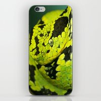 snake iPhone & iPod Skins featuring SNAKE by Ylenia Pizzetti