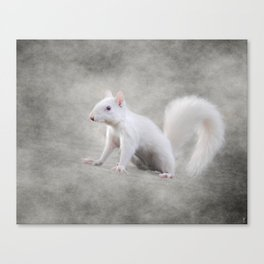 Albino Squirrel Canvas Print