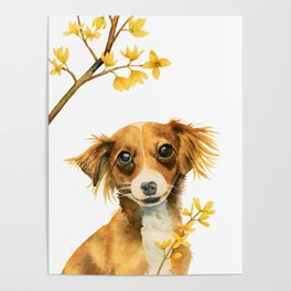 Signs of Spring | Cute Dog with Forsythia Watercolor Painting Poster