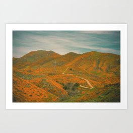California Poppies 032 Art Print
