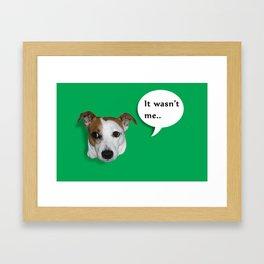 Beavis the Jack Russel  Framed Art Print