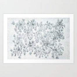 nature's lace Art Print