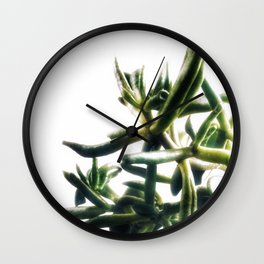 Jade - money plant - succulent in bright light Wall Clock