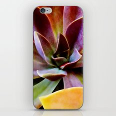 Spectacular Succulents iPhone & iPod Skin