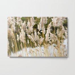 Canal side grass Metal Print