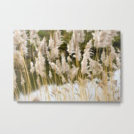 Canal side grass Metal Print