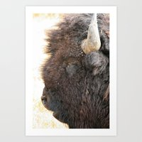 Yellowstone Bison Looking At You! Art Print