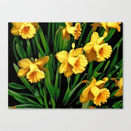 Bouquet Of Golden Spring Daffodils Canvas Print