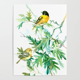 Baltimore Oriole Birds and White Oak Poster
