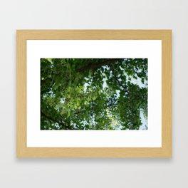 Ginkgo biloba tree in the city Framed Art Print