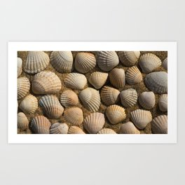 The World of Shells Art Print