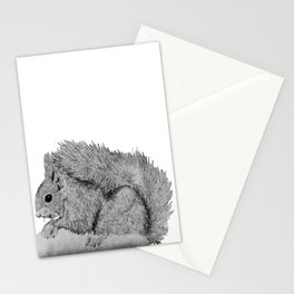 Nibbling Squirrel Stationery Cards