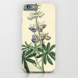 Flower 1539 lupinus mutabilis Changeable Lupine17 iPhone Case