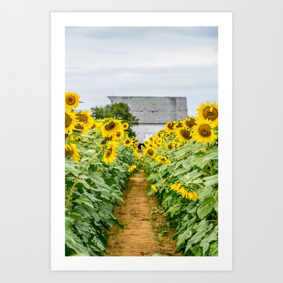 Follow the Yellow Flower Road Art Print