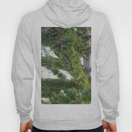 Bristlecone pine needles Hoody