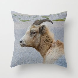 A female big horn works it for the camera in Jasper National Park Throw Pillow