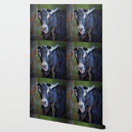 Billy goat Wallpaper