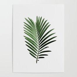 Plant, Leaf, Palm, Nature, Modern art, Art, Minimal, Wall art Poster