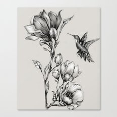 Magnolia Flower and Hummingbird Canvas Print