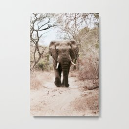 Safari Metal Print