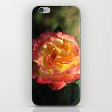 Rose 2599 iPhone & iPod Skin