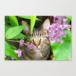 Master of Disguise Canvas Print