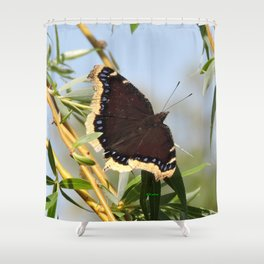 Mourning Cloak Butterfly Sunning Shower Curtain